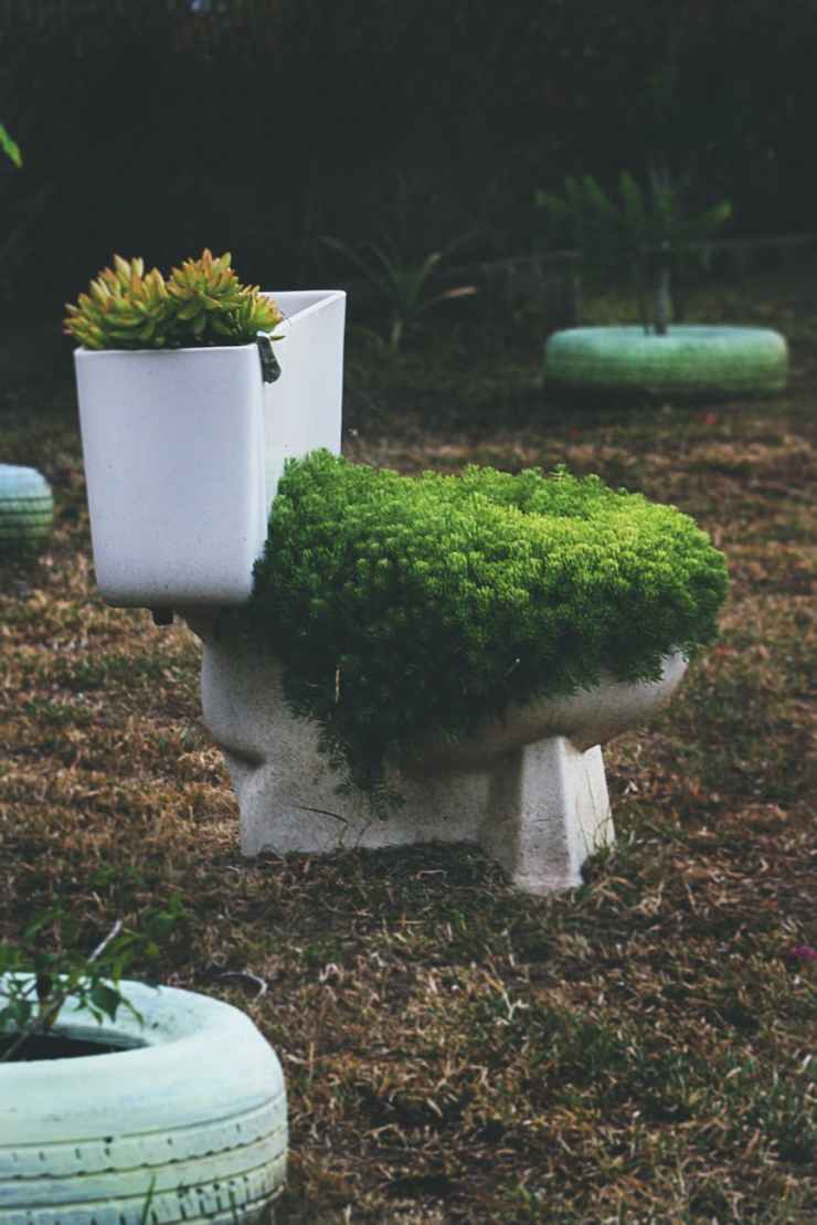 green leafed plants on toilet bowl