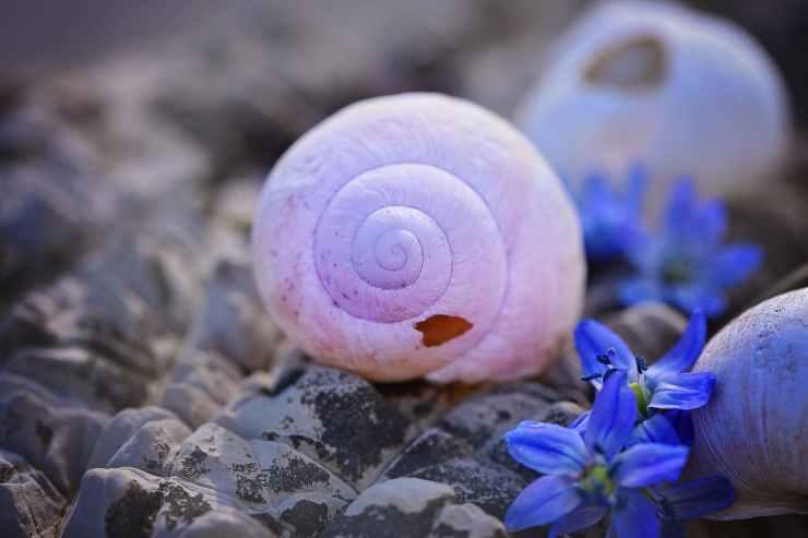 flowers broken stone shell